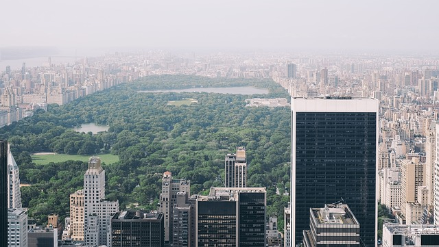 questa foto mostra il central park di new york